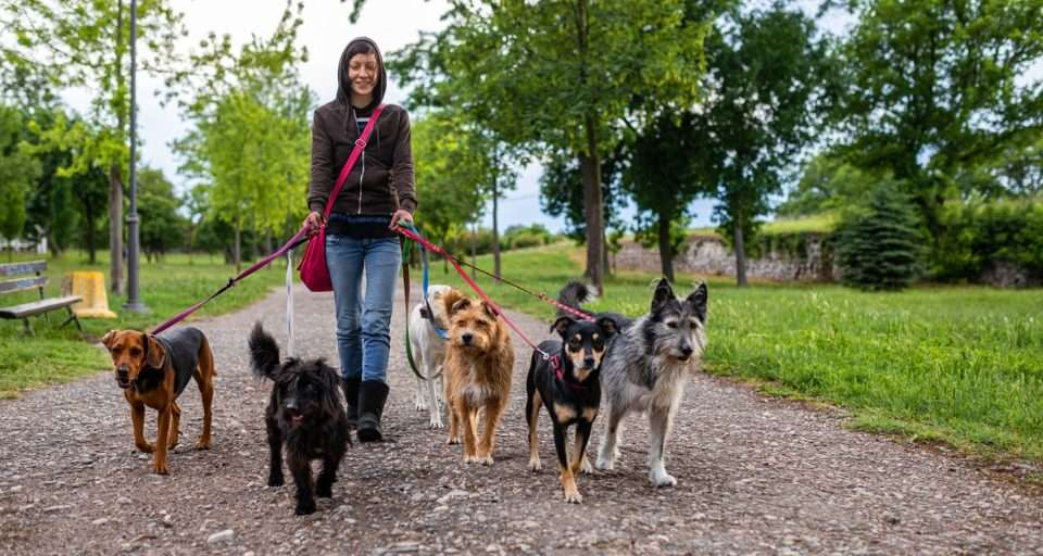 Smiling woman walking with adopted dogs